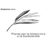 Purpurea di Peyron & Co. snc
